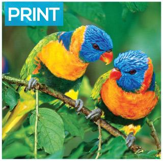 Printers in Birmingham parrots
